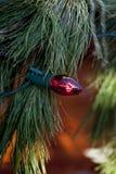 Яркий шарик красного света с ветвями ели Стоковые Фото