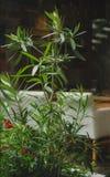 Яркий ый-зелен завод на запачканной предпосылке комнаты Свежие высокие комнатные растения рядом с белой софой скопируйте космос Стоковые Изображения