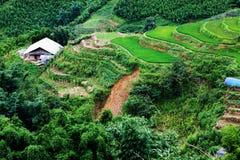 яркий ый-зелен рис fields во время лета вокруг деревни кота кота, s Стоковые Изображения RF