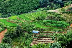 яркий ый-зелен рис fields во время лета вокруг деревни кота кота, s Стоковые Фото