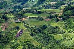 яркий ый-зелен рис fields во время лета вокруг деревни кота кота, s Стоковые Фотографии RF