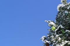 Яркий ый-зелен сияющий шарик рождества и другие украшения рождества на ветви растя в lat ели парка снежном Abies на Стоковые Фотографии RF