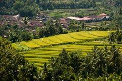 Яркий ый-зелен, террасный рис fields около деревни, Munduk, Бали, стоковое фото