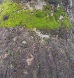 Яркий ый-зелен мох на стволе дерева Стоковые Фотографии RF