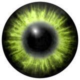 яркий ый-зелен человеческий глаз с средним зрачком и темной сетчаткой Темная красочная радужка вокруг зрачка, взгляда детали в ша иллюстрация вектора