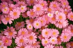 Яркий flowerbed с розовыми цветками Стоковое Изображение RF