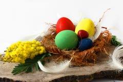 5 ярких покрашенных пасхальных яя в гнезде Стоковое Фото