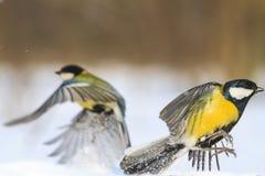 2 ярких птицы летают от одина другого Стоковые Фотографии RF