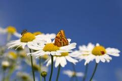 яркое лето ландшафта Стоковая Фотография RF