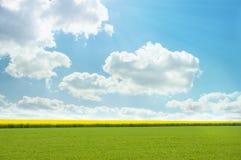 Яркое желтое поле Стоковые Фотографии RF