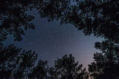 Яркое звёздное небо в лесе ночи стоковые изображения