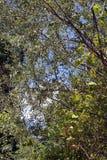 яркое листво стоковые изображения