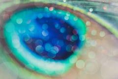Яркое и абстрактное запачканное bokeh на предпосылке павлина пера с мерцающим ярким блеском Стоковая Фотография