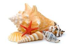 яркое красное seastar weathere нескольких starfish Стоковое Фото