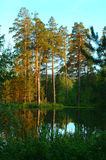 яркое лето пейзажа озера Стоковая Фотография