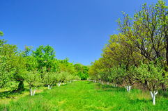яркое лето сада дня Стоковое Изображение RF