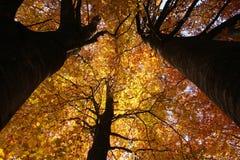 яркое листво стоковое фото