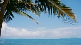 Яркое небесно-голубое лето кокосовой пальмы моря в Таиланде стоковая фотография