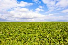 яркое небо зеленого цвета поля Стоковое фото RF
