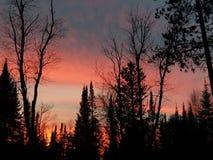 Яркое ночное небо Стоковые Изображения RF