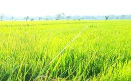 Яркое ое-зелен поле в полдне стоковые изображения rf