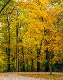 Яркое падение покрасило листья на голубом бульваре Риджа Стоковое Фото