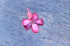 Яркое падение цветков на том основании outdoors Стоковые Изображения