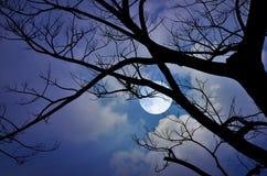 Яркое полнолуние и белые облака в ноче стоковая фотография