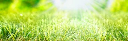Знамя весны Стоковые Фотографии RF