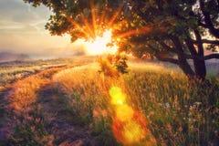 Яркое солнце излучает через ветви дерева на луге утра на восходе солнца Яркий рассвет с сияющими солнечными лучами Стоковое Фото