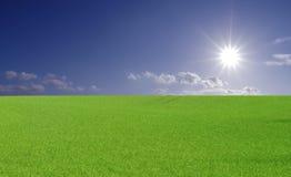 яркое солнце поля Стоковое Изображение