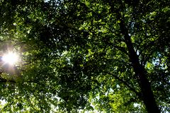 Яркое солнце среди зеленых ветвей дерева, голубое небо стоковые фото