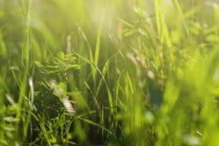 яркое солнце вниз абстрактные предпосылки естественные Стоковые Изображения