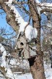 Яркое солнце на снеге покрыло коробку птицы стоковое изображение rf