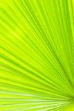 Ярко - зеленая предпосылка листьев ладони Стоковое Изображение RF
