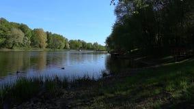 Ярко зеленые деревья отражены в озере зеркала Совершенная предпосылка никто акции видеоматериалы