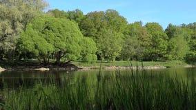 Ярко зеленые деревья отражены в озере зеркала Совершенная предпосылка никто сток-видео