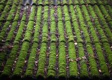 Ярко - зеленый цвет мшистой крыши Стоковые Изображения