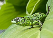 ярко - зеленый цвет Стоковое Изображение RF