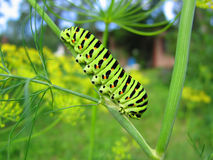 ярко - зеленый цвет Стоковое Фото