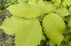 Ярко - листья зеленого цвета Стоковые Фотографии RF