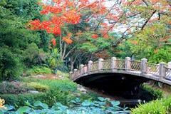 Ярко покрашенные цветки Стоковое Фото