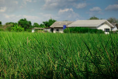 Ярко - предпосылка зеленой травы Стоковые Фото
