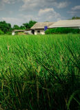 Ярко - предпосылка зеленой травы Стоковое Изображение