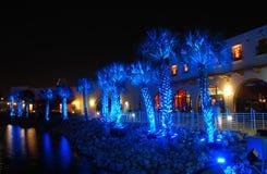 ярк освещенные пальмы стоковая фотография
