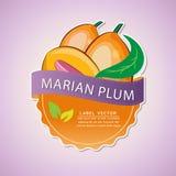 Ярлык плодоовощ сливы Мэриан, иллюстрация Стоковые Изображения RF