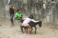 Ярмарка лошади Стоковые Изображения RF