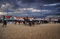 Ярмарка лошади Golega стоковые изображения rf