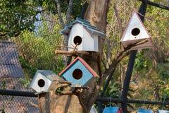 ярд белизны США дома заднего цвета птицы голубого вися красный Стоковые Фото