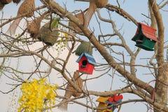ярд белизны США дома заднего цвета птицы голубого вися красный Стоковые Изображения RF